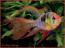IloveFish